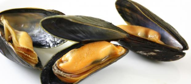 Allerta alimentare: cozze italiane contaminate dal colera