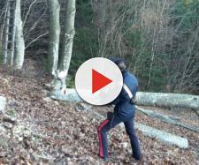 Trentino, boscaiolo ha incidente sul lavoro: l'imprenditore finge una caduta casuale | giudicarie.com