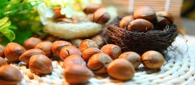"hazelnuts/photo via ""sunnysun0804"" - Imge credit CCO | Pixabay"