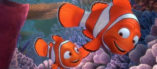 Alla ricerca di Nemo: domenica 23 dicembre su Rai 3 e in streaming su Raiplay - thinglink.com