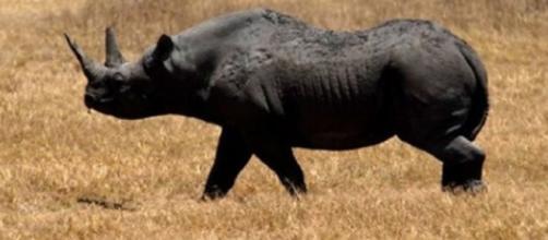 Cinco animales extintos a consecuencia del hombre