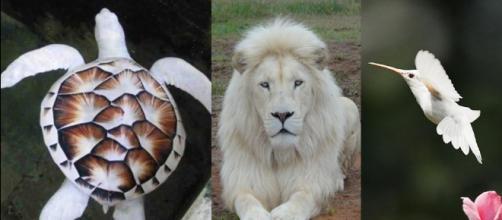 Animais brancos albinos que realmente existem (Reprodução Mega Curioso/Hyperscience))
