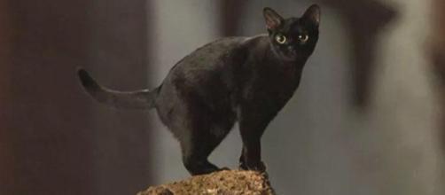 Eduardo Moscovis irá interpretar a forma humana do gato León. (foto reprodução).