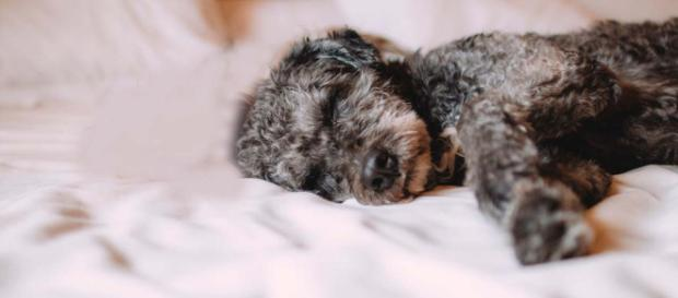 Woman finds her childhood puppy, given away by her father when she was young. [Image Pexels]