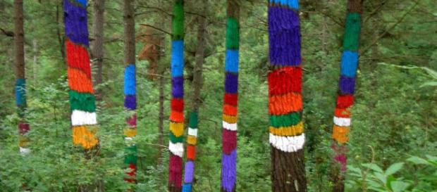 The Painted Forest of Oma [Image Javi/Flickr]