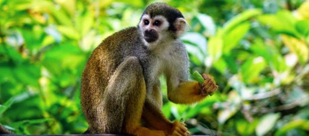 A woman in Egypt has been jailed for 3 years for sexually assaulting a monkey. [Image Pixabay]