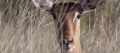 Best wildlife clips on BBC Earth - YouTube - Image credit BBC Earth | YouTube