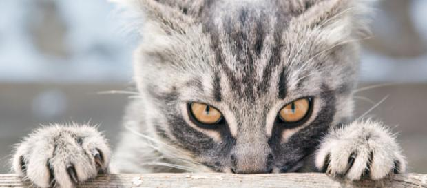 Six raisons étayées scientifiquement de détester les chats (ou de ... - lefigaro.fr