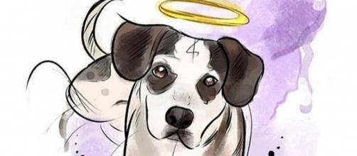 Cão teria sido envenenado e espancado por segurança do Carrefour de Osasco