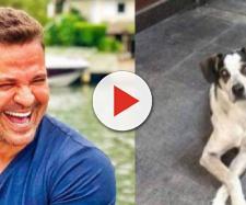 Eduardo Costa e o cachorro Manchinha (Reprodução/Instagram/G1)