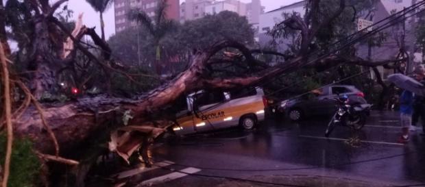 Árvore cai em van escolar e mata motorista. (foto reprodução).