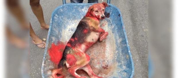 Pintaram a cadela de vermelho para ninguém perceber o sangue no animal. (Foto: Reprodução)