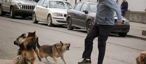 Multas de hasta 26 mil pesos por mordedura de perros | Cronicas ... - blogspot.com