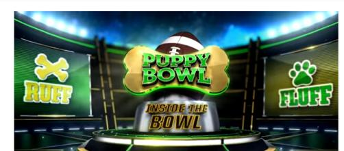 Puppy Bowl XIV airs February 4 at 3:00 PM EST. (Image via Animal Planet Youtube screenshot).