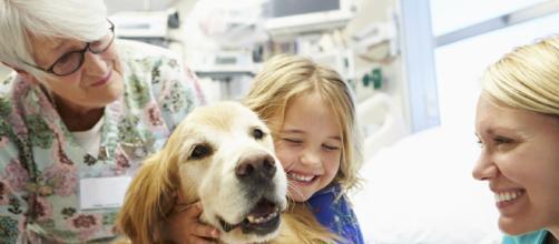 Perros de terapia, el mejor consuelo para los afectados por enfermedades
