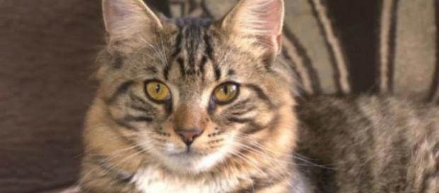 Animali, bastona gatto: condanna pesante