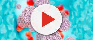 ▷ Virus del Papiloma Humano ⇒ 【El Tratamiento Definitivo】 - cuidateconsalud.com