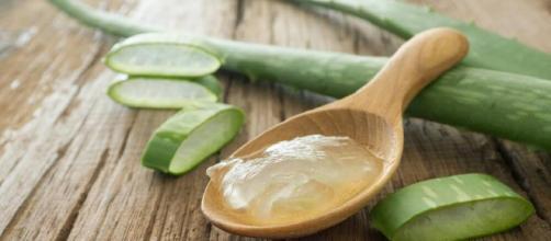 Alivia las picaduras de pulgas preparando 5 remedios naturales ... - mejorconsalud.com