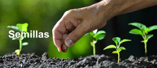 La semilla es la principal materia prima de la agricultura