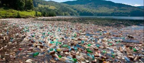 Los científicos aseguran que se están acumulando desechos plásticos en el Ártico noruego.