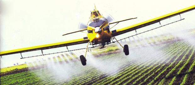 Se debe disminuir por completo el uso de los pesticidas en la agricultura.