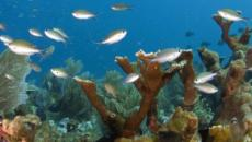 ¿Es posible salvar los arrecifes de coral del mundo?