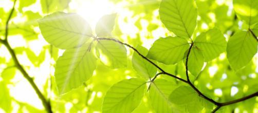 No solo los humanos y animales sufren cuando sube el mercurio, las plantas también sienten el calor.