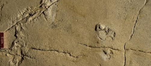 Trovate impronte di bambini primitivi