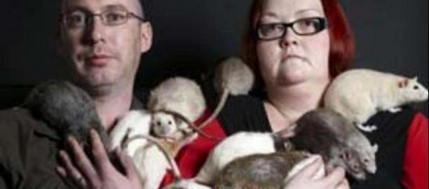 """El """"virus de Seúl"""" puede pasar de las ratas mascotas a los dueños."""