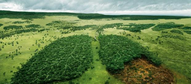 La naturaleza está en peligro y es nuestro deber protegerla