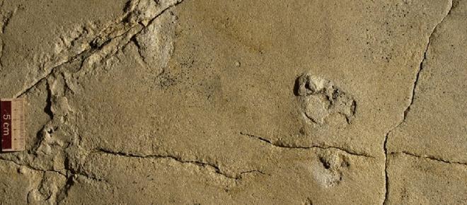 Sensazionale scoperta: trovate in Etiopia le prime orme di bambini preistorici