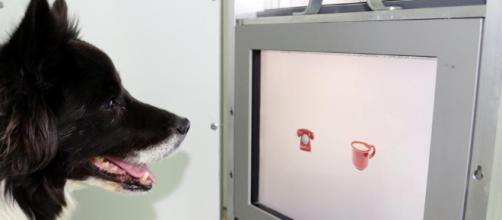 Experimento: ¿se pueden enseñar trucos nuevos a un perro viejo? - lavanguardia.com