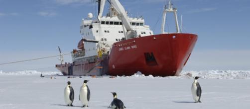Pinguini sul ghiaccio marino di fronte alla RRS James Clark Ross (fonte bas.ac.uk).