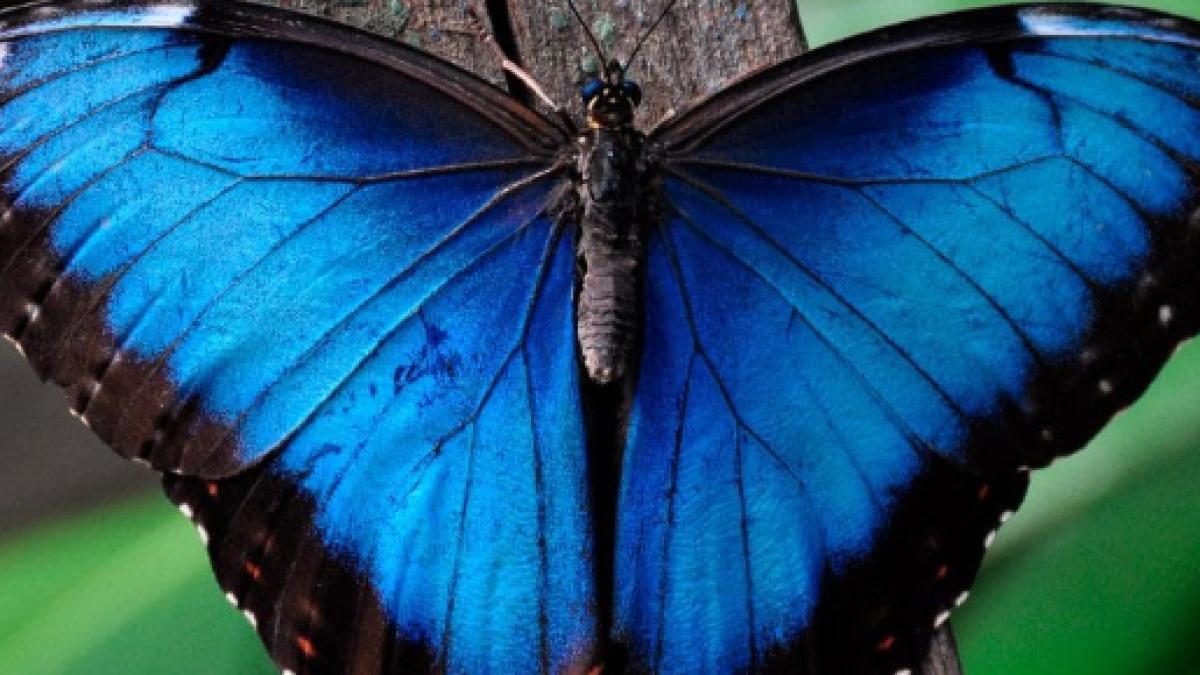 Los Jardines De Mariposas Ofrecen Alguna Esperanza Para Los