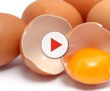 Salmonella in allevamento di galline ovaiole nel Distretto di Correggio