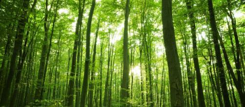 Cuando se trata de esparcir sus semillas, muchos árboles en la selva dependen de los animales