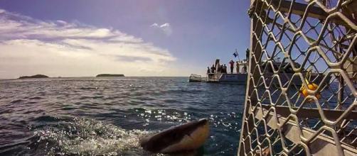 el tiburon no es deborador de hombres