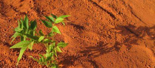 La NASA podría enviar plantas a Marte en 2021 - blogjardineria.com
