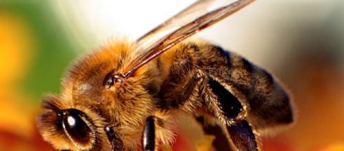 Los pesticidas sí pueden estár acabando con las abejas y lo ... - xataka.com