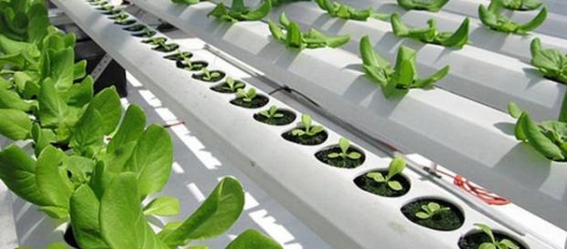 Agricultura sin suelo alternativas a la demanda de tierras agrícolas.