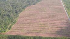 La inversión en biocombustibles puede ser catastrófica para la selva