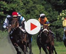 Le corse dei cavalli mascherano i sondaggi clandestini