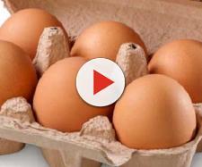 Salmonella in un allevamento di galline da uova