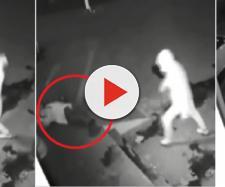 Vídeo mostra ladrão nocauteando comparsa com uma pedrada durante roubo
