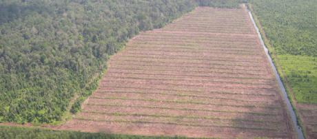 La deforestación debe controlarse ahora mismo.