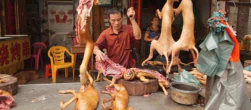 Comes carne de perro pregunta dificil de contestar.