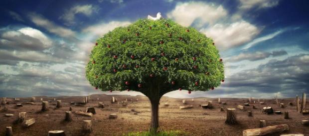 Los gases de efecto invernadero deben reducirse.