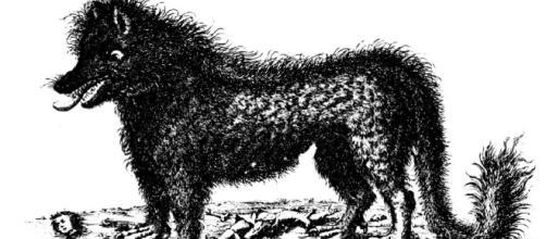 El video del chupacabras, o más exactamente la Bestia de Elmendorf - anfrix.com
