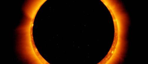 Un eclipse cambia el comportamiento de los animales en la naturaleza