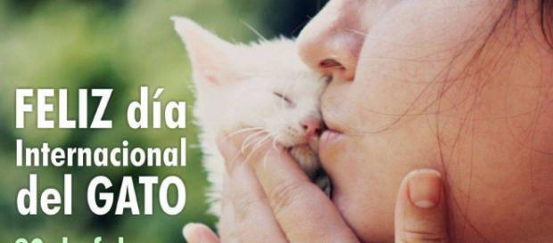 Celebran 'Día Internacional del Gato' | nayaritenlinea.mx - nayaritenlinea.mx